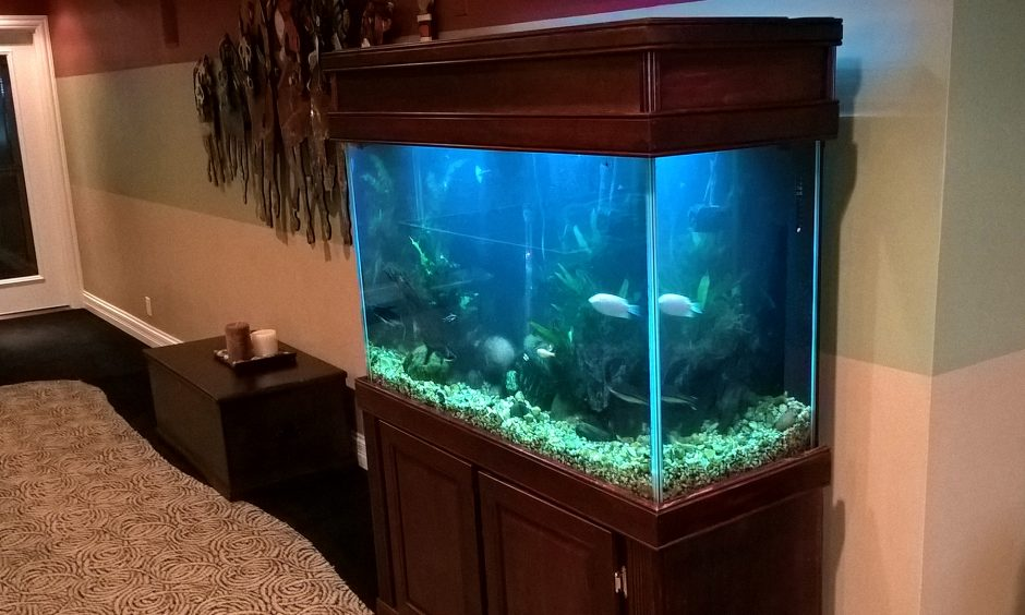 Brown-Wood-tropical-fish-tank
