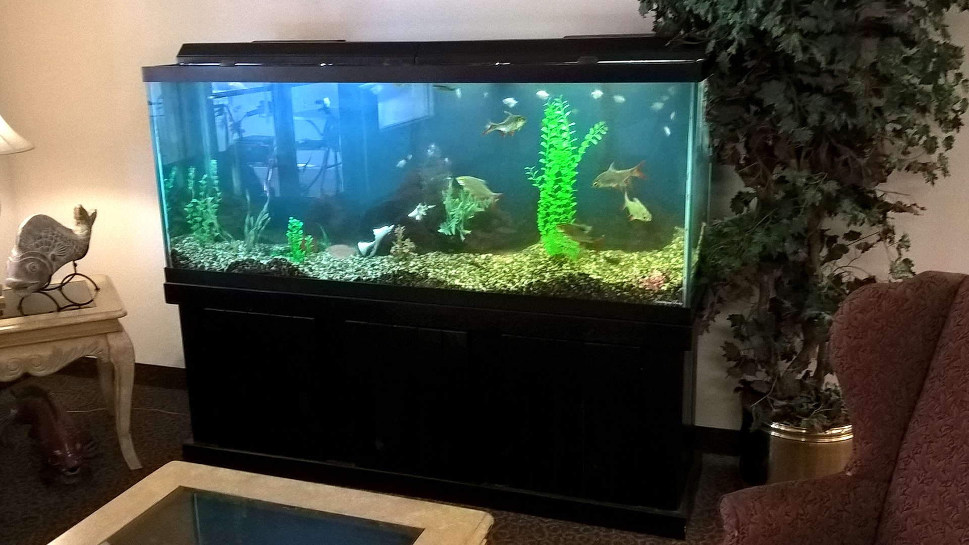 Fish-tank-in-lobby-maintained